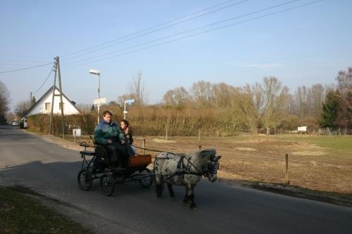 Ponnykar rijden